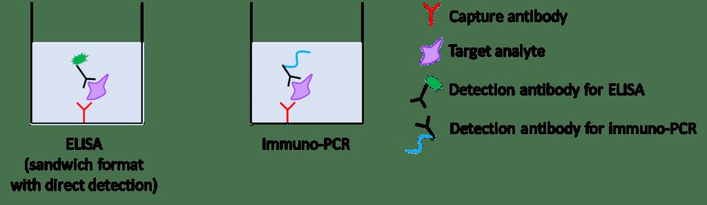 Immuno-PCR