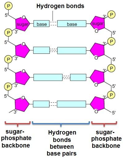 エタノール沈殿における塩の役割