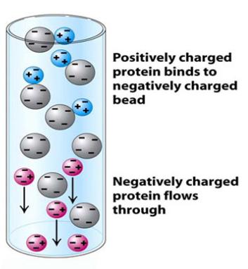 イオン交換 電荷