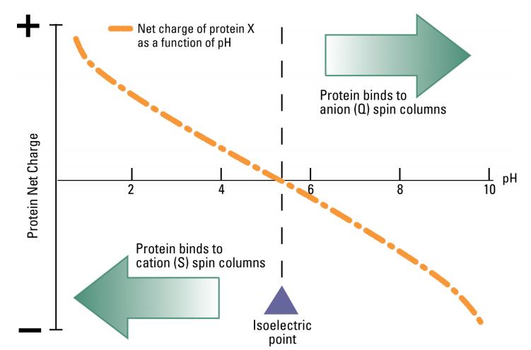 イオン交換 電荷とpH