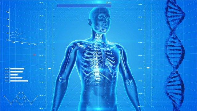 エクソソームの生理機能:in vivo