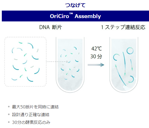OriCiro Assembly (連結反応)