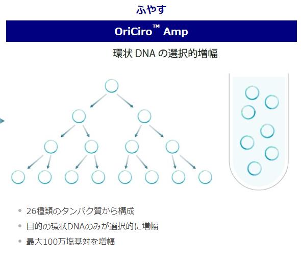 OriCiro Amp (増幅反応)