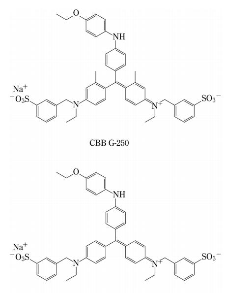 CBB染色 : R-250とG-250