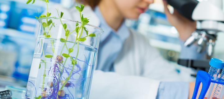 植物のゲノムDNAの抽出方法:プロトコル