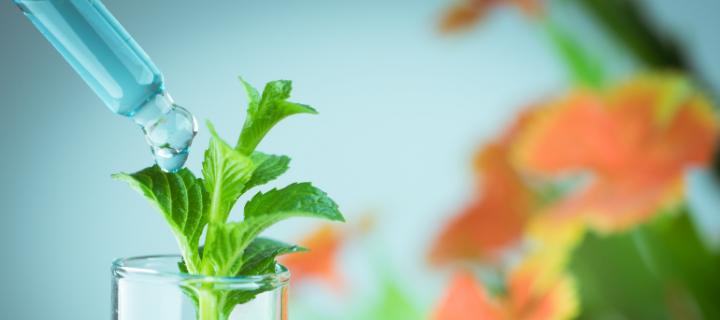 植物DNAの抽出に必要な試薬