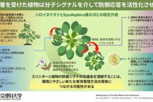 植物はどのように植食者を感知するのか